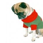 10 ok, amiért a kutyák nem szeretik a karácsonyt