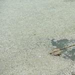 Fotó: 30 ezer kilogramm hal pusztult el Kínában