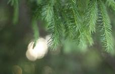 Adventi irodalmi naptár – december 19.