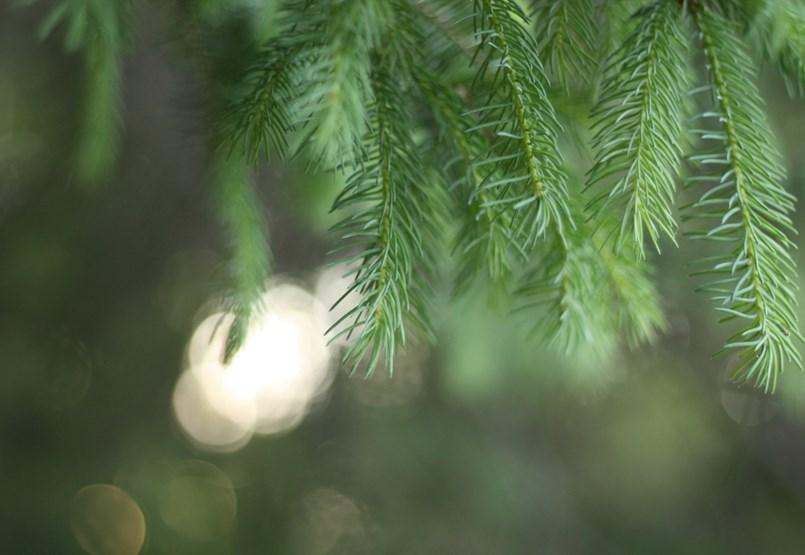 Adventi irodalmi naptár - december 19.