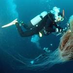 Fürdés a medúzákkal (sokkoló képek és videók)