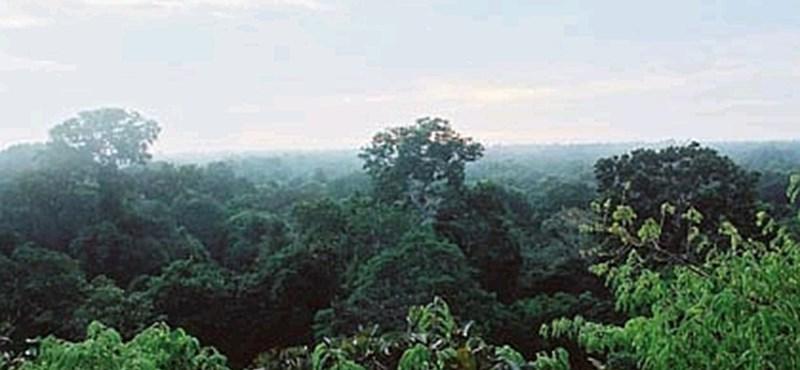 Eszement sebességgel irtják az amazonasi erdőket a műholdak szerint