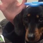 Ezek a kutyusok is a legmenőbb játékon pörögnek – videó
