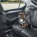 Ezt is kötelezővé kéne tenni, a kutyáknak sem ártana a biztonsági öv a kocsiban