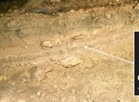 6200 éves macskamaradványokból kiderült: az állatok rájöttek, hogy megéri követni az embert