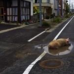 Újra kapható Japánban fukusimai polip és csiga