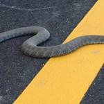 Kígyót láttak a pesti rakparton - fotó, videó