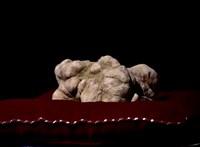 Hatalmas szarvasgombára bukkantak Baranyában