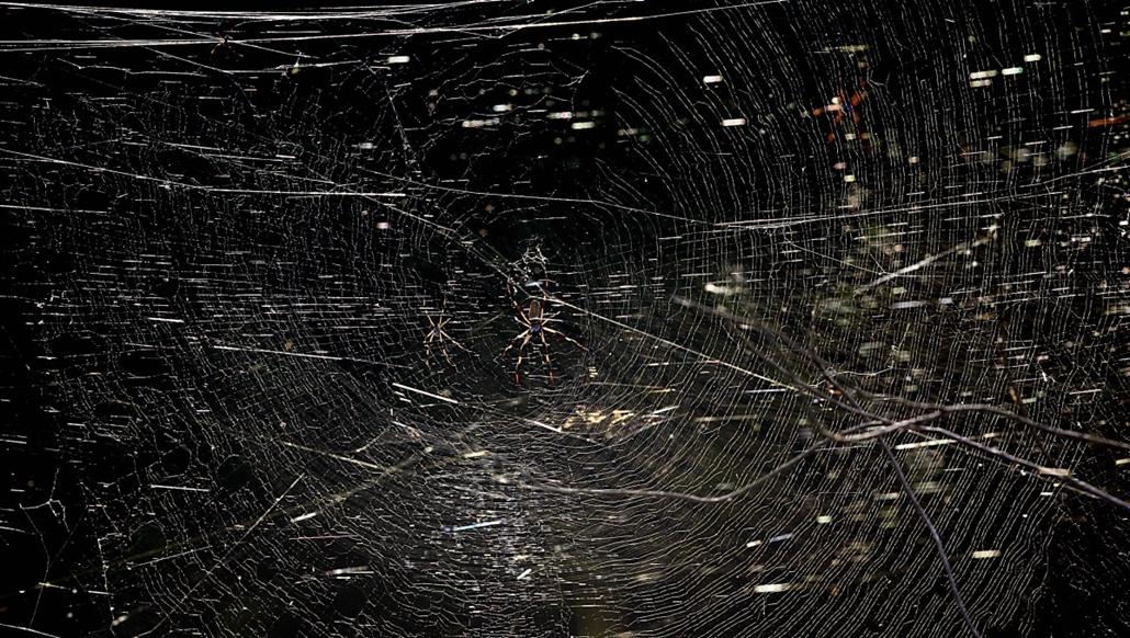 afp. pók, pókháló, nagyítás - 2006.09.07. UNITED STATES, KENNEDY SPACE CENTER : A large spider web is shown 07 September, 2006 in the Merritt Island National Wildlife Refuge at the Kennedy Space Center in Florida.