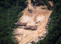 Drámai adat jött Brazíliából, hihetetlen sebességgel irtják az erdőket