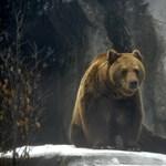 Ismét medvék járják az Aggteleki Nemzeti Parkot