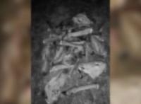 Feldarabolt állati tetemeket találtak a Tolna megyei Gyönknél