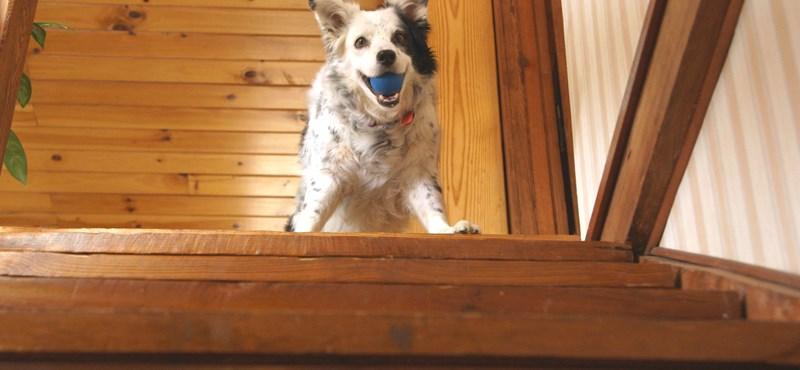 Tesztelje a kutyáját ezzel a 4 érdekes feladattal