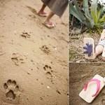 Macskalábnyom-papucs, a jövő nyár slágere gyerkőcöknek?