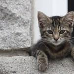 Férfiatlannak tartják a macskás férfiakat az amerikai nők egy friss kutatás szerint