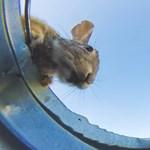 """Itt az új """"vödrös kihívás"""" cuki állatokkal – videó"""