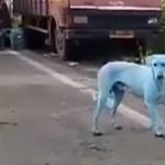 Mumbaiban olyan koszos a víz, hogy bekékülnek tőle a kutyák
