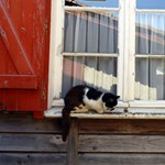 Aggasztóan sok védett békát és madarat vadásznak le a fokvárosi macskák