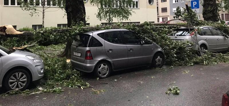 Szélvihar söpört végig Horvátországon, kétszáz ember megsérült