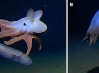 Különleges állat úszott a kamera elé 7000 méter mélyen