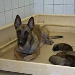 """A """"szegény"""" kutya- és macskatartóknak nyílt szociális állateledelbolt Bécsben"""