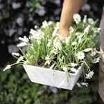 Itt a tavasz! Hasznos tippek balkonnövényekhez (fotókkal)