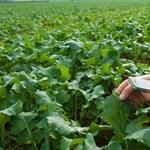 Durván bekavarnak a mezőgazdaságnak is az antimikrobiális gyógyszerek