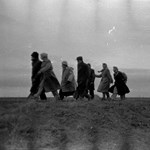 1956 és a migráns narratíva