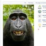 Szerzői jogokat sért a nem mindennapi, majmos szelfi?