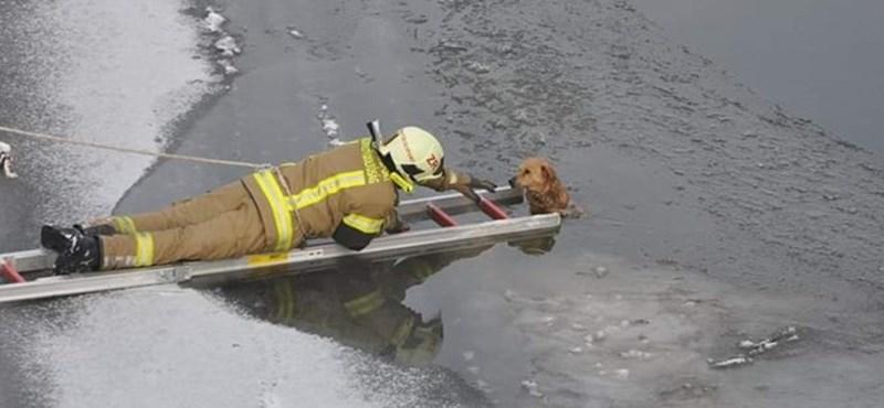 Jeges vízből mentettek ki egy kutyát Zagyvarékason