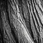 A fák sem bírják a hőséget, csak Németországban 110 000 hektár erdő veszett oda
