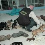 Több mint kétezer kutyát és macskát kínzott halálra egy állatmenhelyet működtető nő Spanyolországban