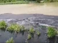 Horvátország szennyvíziszapjának több mint felét Székesfehérvárnál tették le