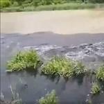 Több mint 70 helyen folyik tisztítatlan szennyvíz a Dunába Budapestnél