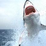 Emberi testrészeket találtak a halászok egy cápa gyomrában