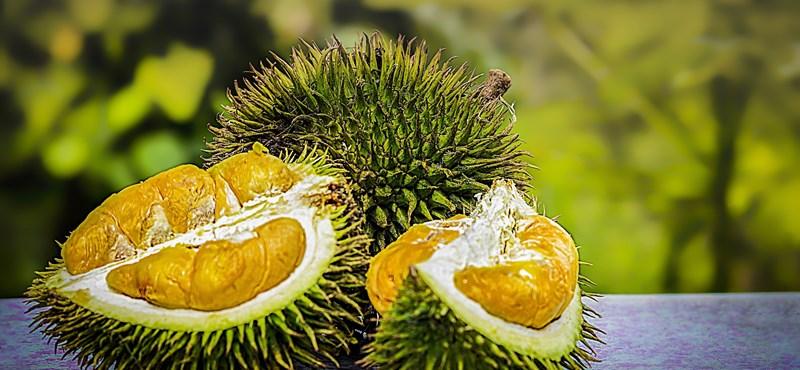 La fruta huele terriblemente desagradable, pero ahora resulta tremendamente buena de usar.