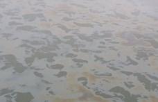 Hatalmas olajfoltot láttak a Dunán Budapestnél