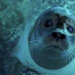 Szabadkikötőkért áldozhatja fel a környezetvédelmet a brit kormány