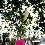 Kiskertet szeretne? Ügyeljen a növények fényigényére! (Tippek)