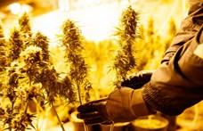 Föld alatt termesztette a marihuánát, fegyházba küldték