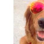 Hivatásos ölelésosztogató kutyája van New Yorknak