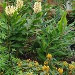 Az angol királynő kertészt keres - mindössze havi 370 ezer forintért