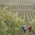 Családi örökség a szőlők között