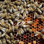 """""""Ez az év fekete lesz"""" – kicsinálta a méhészeket az időjárás"""