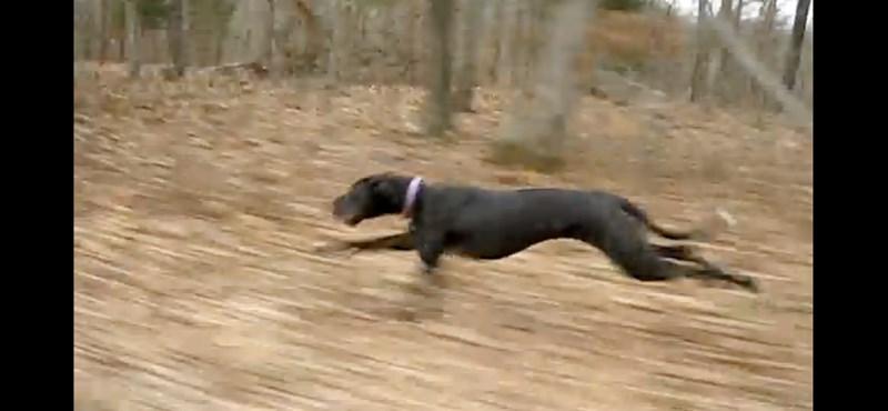 Ez a dán dog majdnem 50-nel száguld (videó)