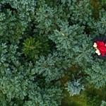 Csomagolás gyerekrajzba, fenyőfa kölcsönbe: hogyan tegyük zöldebbé a karácsonyt?