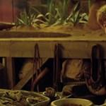 Új trailerrel támad a Legendás állatok 2: ettől minden Harry Potter-rajongó beájul