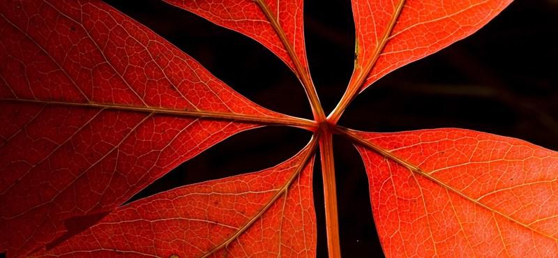 Időjárás: lesz ma minden, ami ősszel lenni szokott