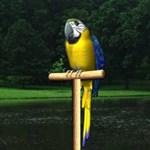 Vicces: egy beszélő papagáj lehet a képernyővédője