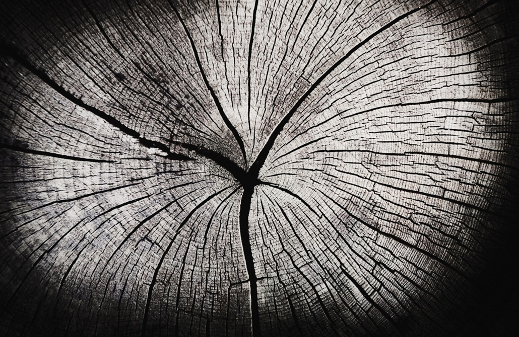 Fák világnapja - Structure in a tree, cross section of a tree trunk, dry cracked wood